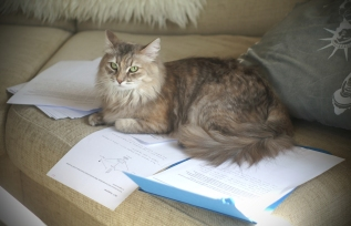 Didi vahtii, ettei emäntä opiskele liikaa