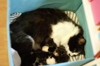 Carola-emo on hyvin tarkka pienokaisistaan
