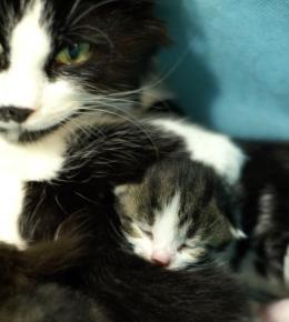 Pikkuinen Dante on perinyt äitinsä Carolan nenätäplän