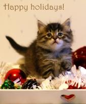 Happy holidays! Täplä say hello.