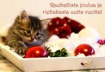 Joulun ja uudenvuoden toivotukset! Terveisiä tassuttelee Diiva.