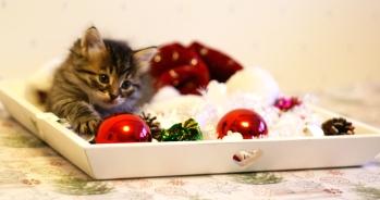 Diiva tassuillee joulupalloa