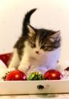 Dante ja joulupallo