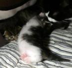 Venyttelyä isojen kissojen malliin