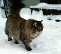 Häntä pystyssä ihmettelemään kylmää! -25 pörhistää kenen tahansa turkin.