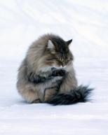 Tassuun on tarttunut lunta