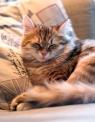 Anni ottaa kireät tirsat. Oudolta haisevat kissakaverit vähän kiristävät hermoja.