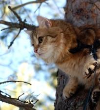 Anni kiipesi reippaasti puuhun