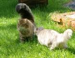 Kissakaverista saa tukea