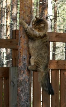 Vellu rakastaa puissakiipeilyä!