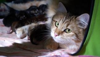 Anni ja lapset