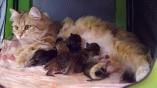 E-kittens & Anni
