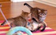 Golden boys teasing their sister