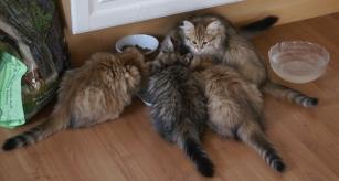E-kittens
