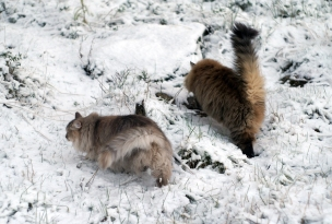 Vellu ja Didi talvella 2015