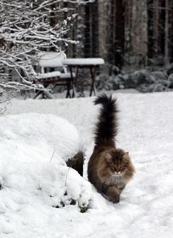 Vellu talvella 2015