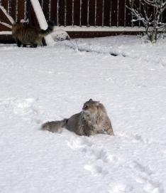 Didi talvella 2015