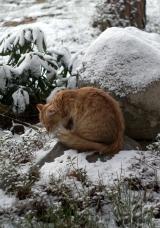 Anni talvella 2015
